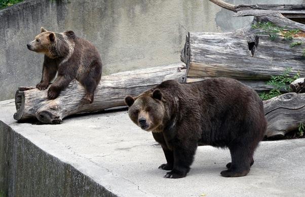 medveď ZOO