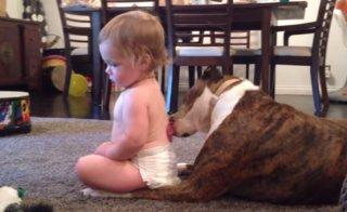 Pes a olizuje dieťa