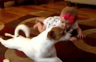 Pes učí lezenie dieťaťa